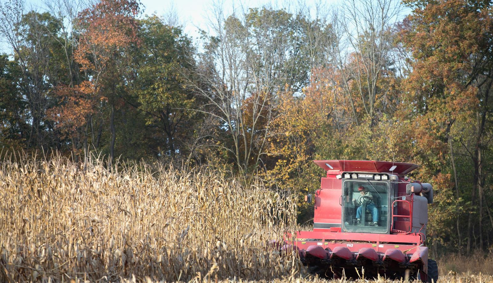 As biodiversity declines on corn farms, pest problems grow