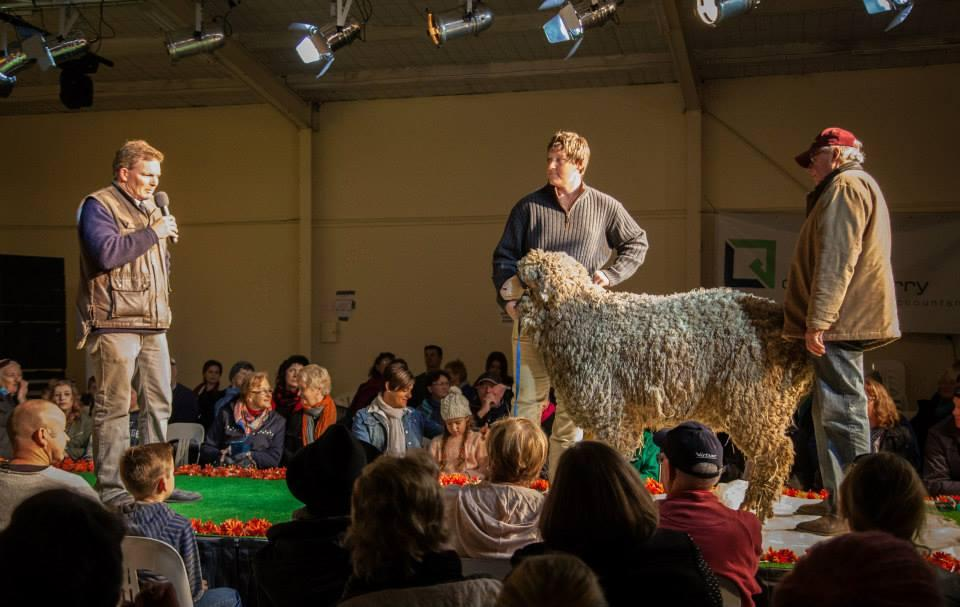 Hamilton Sheepvention