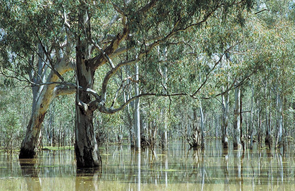 Flows benefit forest