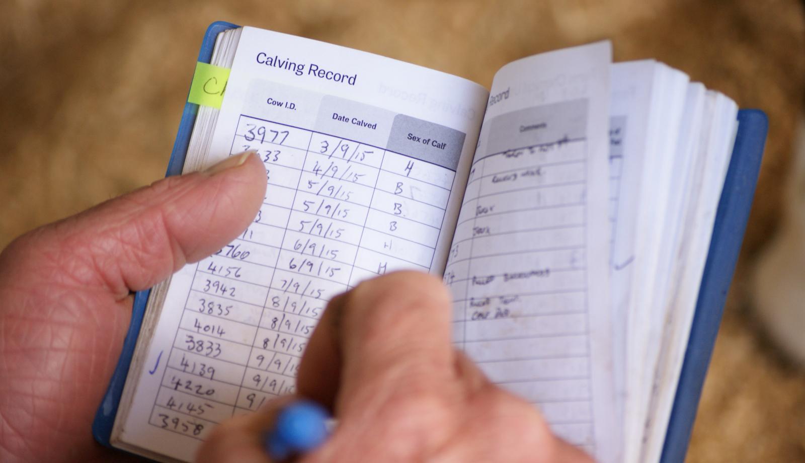 Don't delay calf records