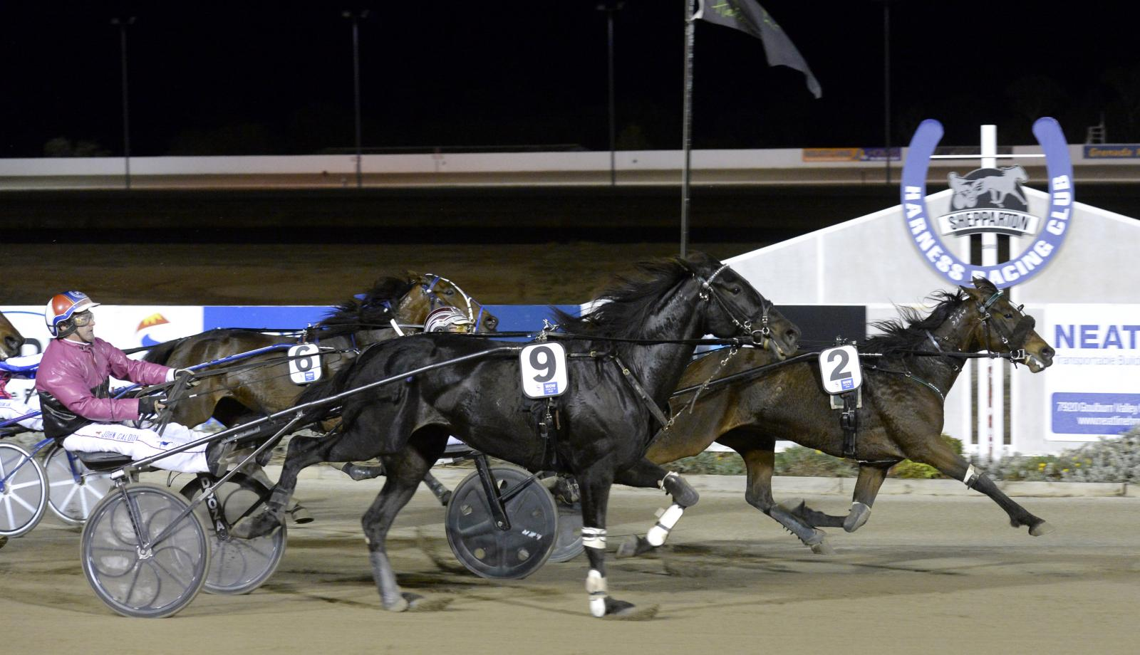 Enjoy the thrill of harness racing