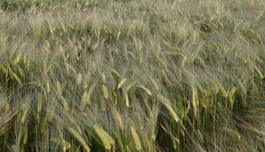 Timely disease warning ahead of sowing