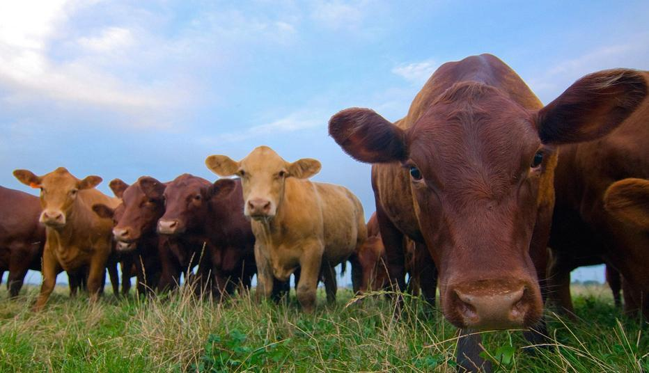 Prepare biosecurity plans