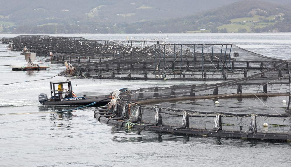 Gutted by fish farm decision