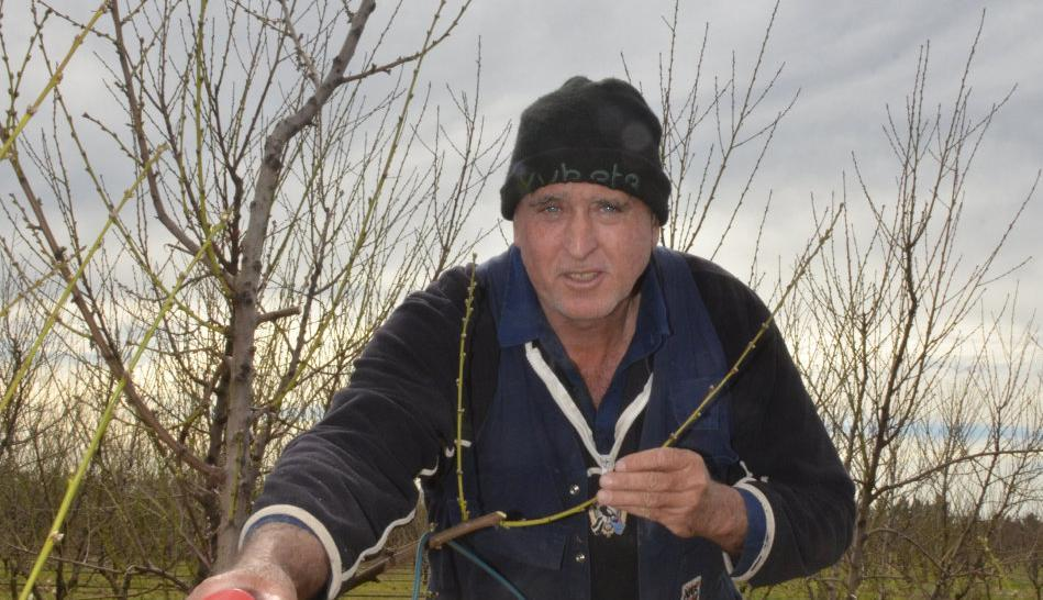 Residents urged to cull unwanted trees