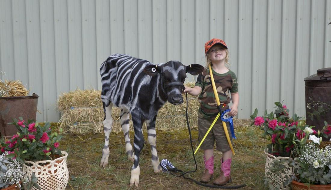 Heifers in spotlight