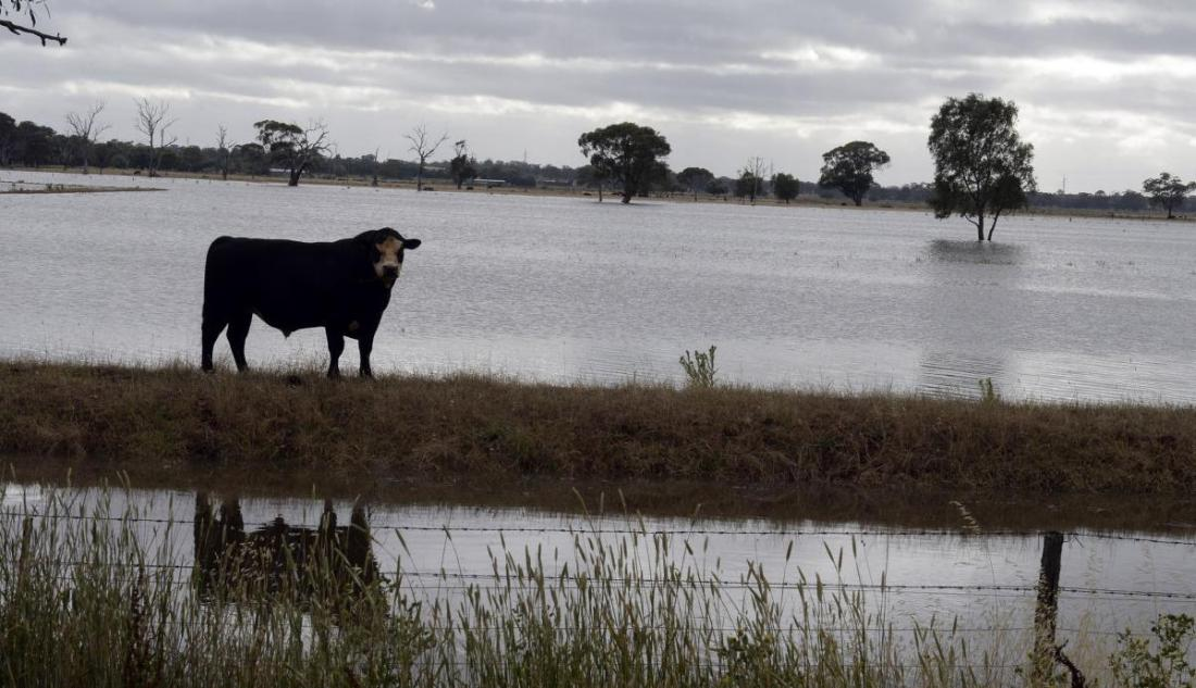 Farmers feel the pinch after deluge