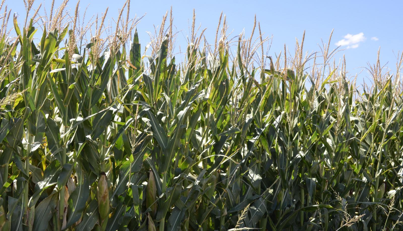 Farmers urged to seek assistance