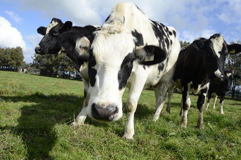 New milk supply agreement