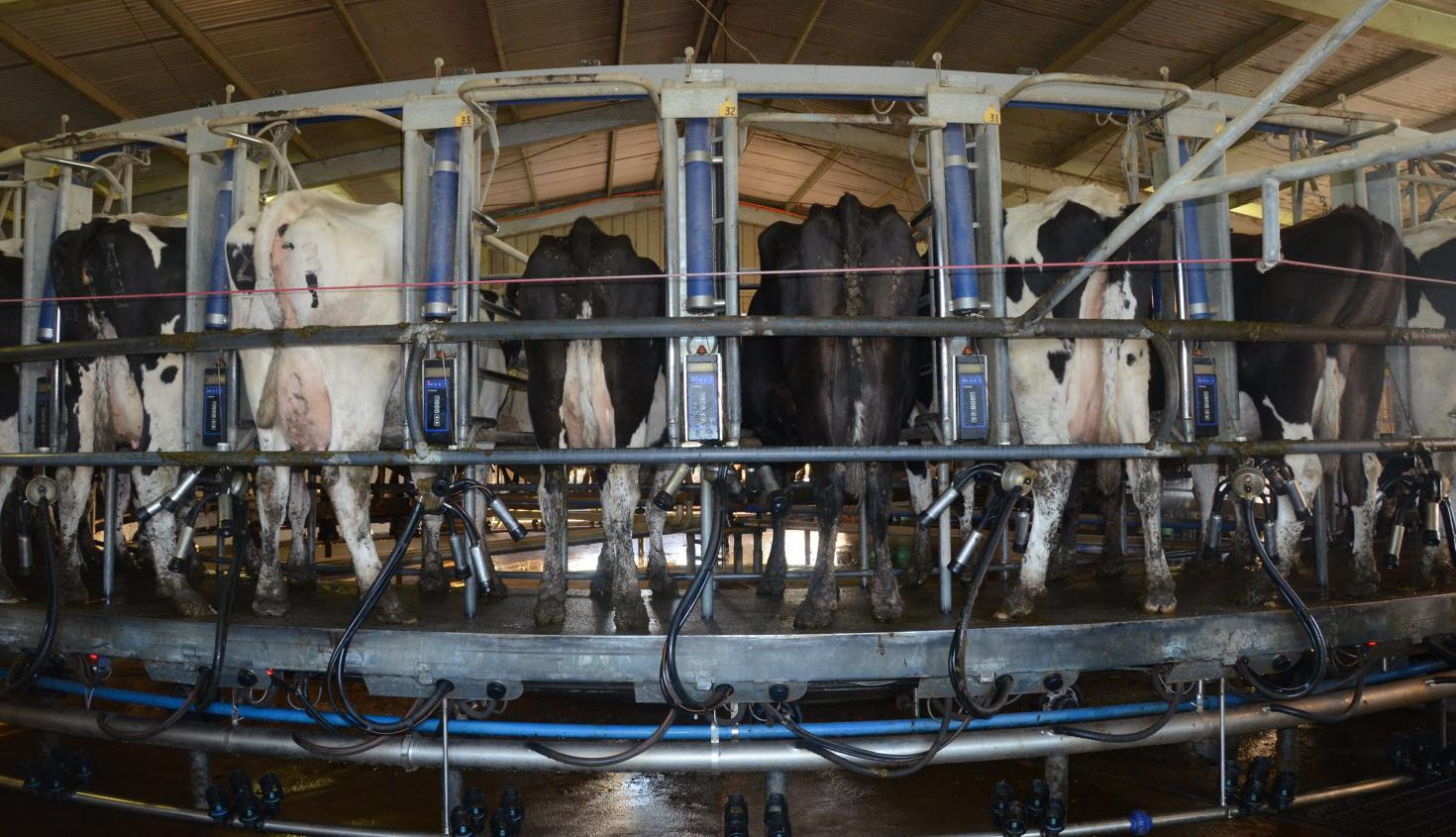 Dairy businesses suffering after price cut