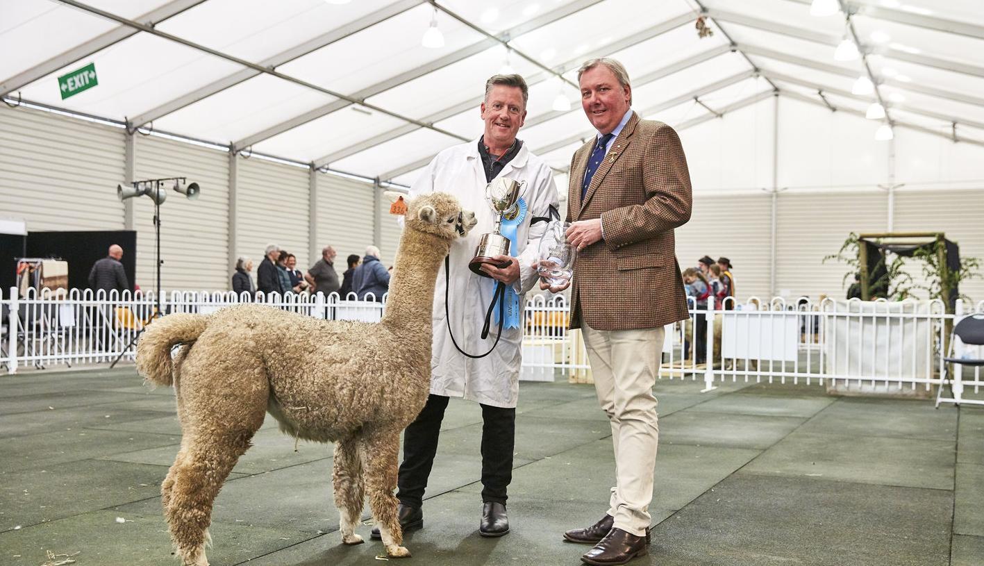 Alpacas show results
