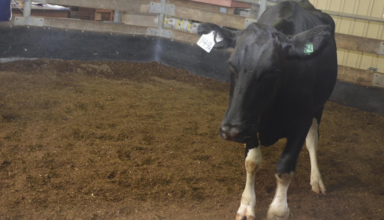 Dairy sale was 'good'