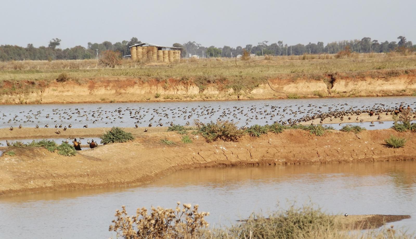 Kerang wetlands targeted