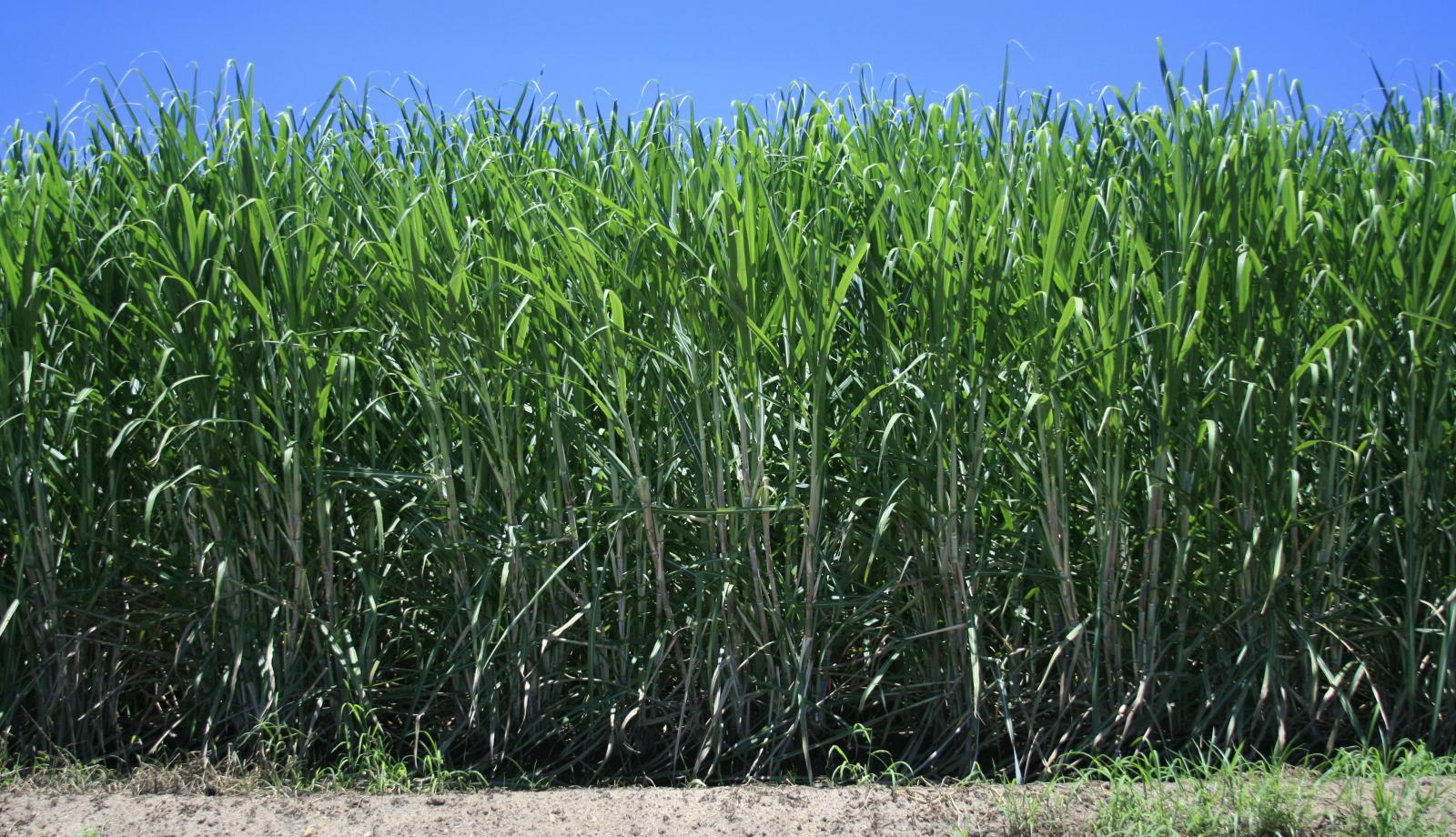 Senate support for sugar code