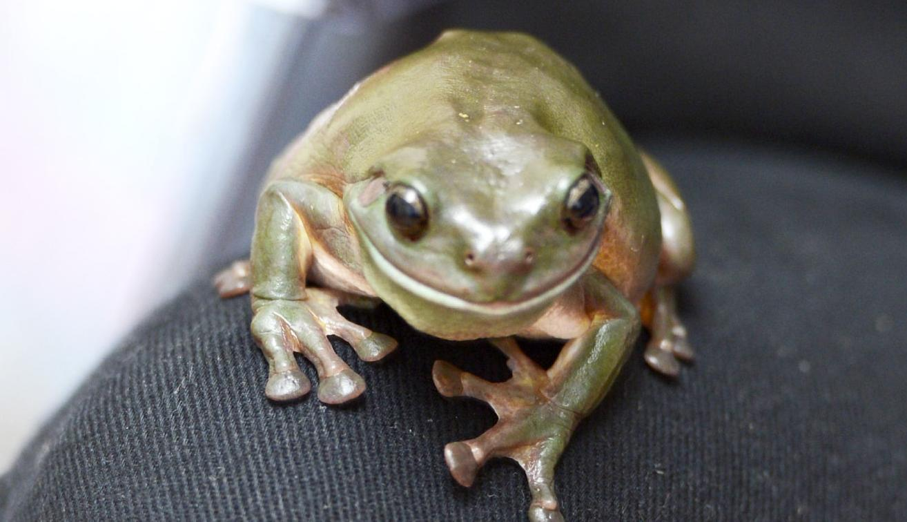 New app to identify frog species at risk