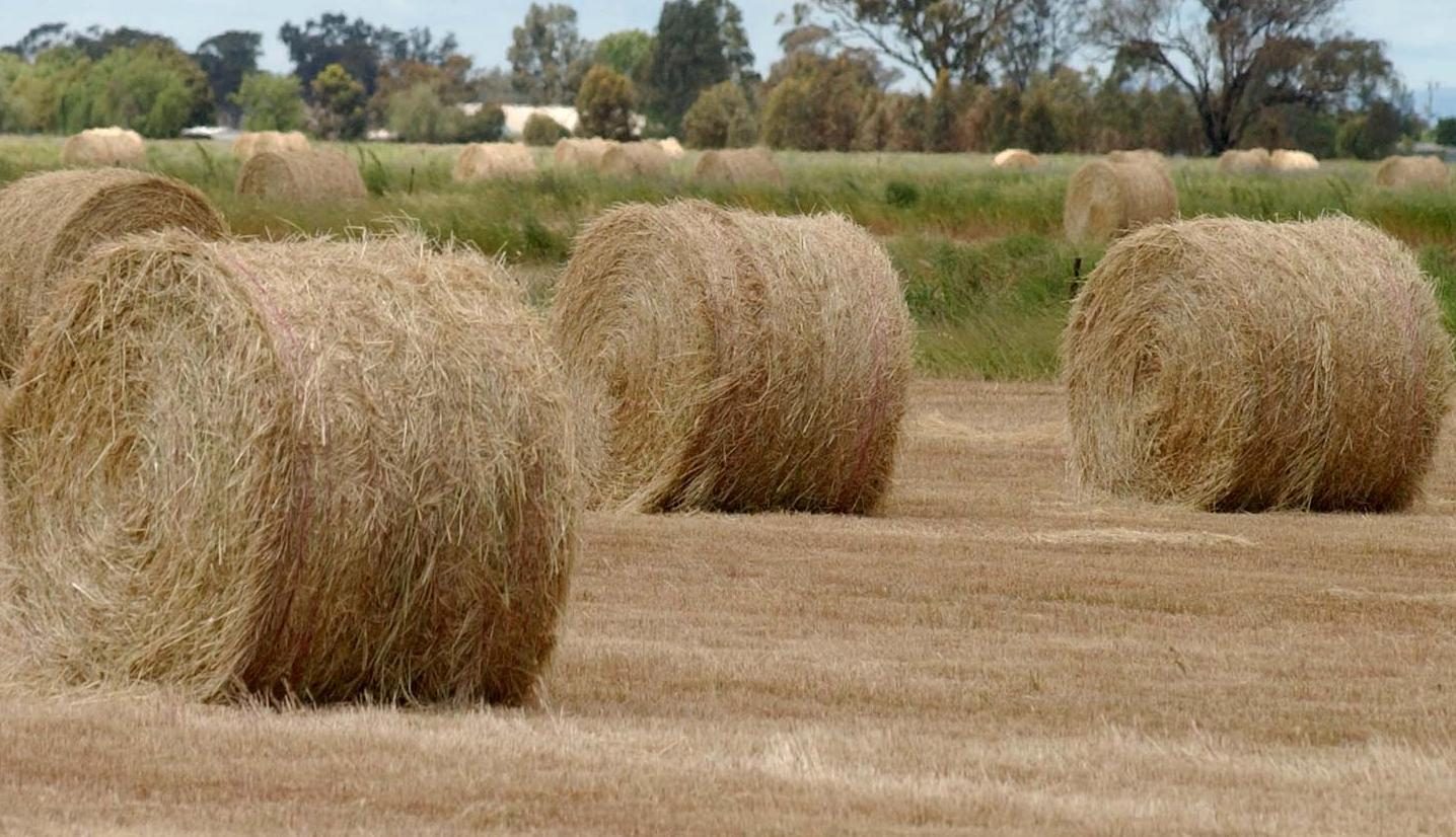 Quality hay expected to sell