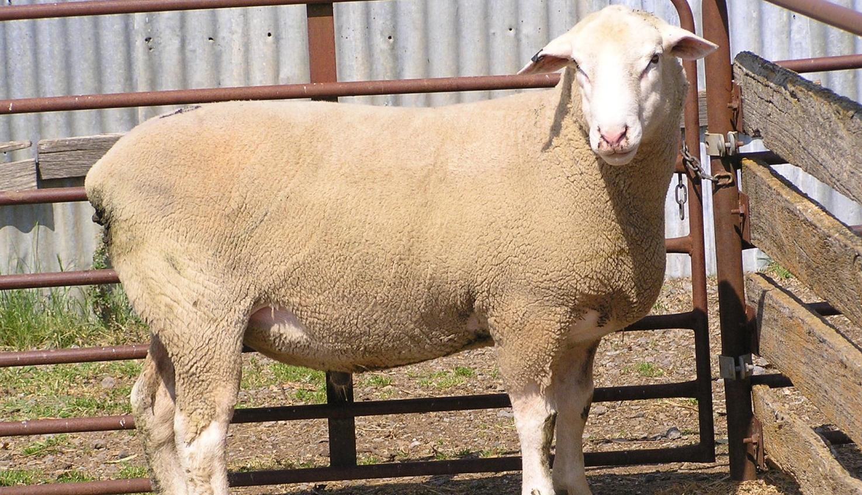 Ram makes $2200