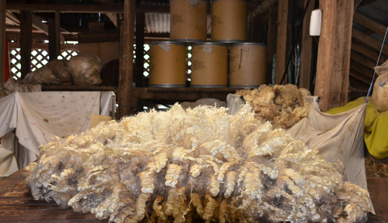 Scam targets wool exports
