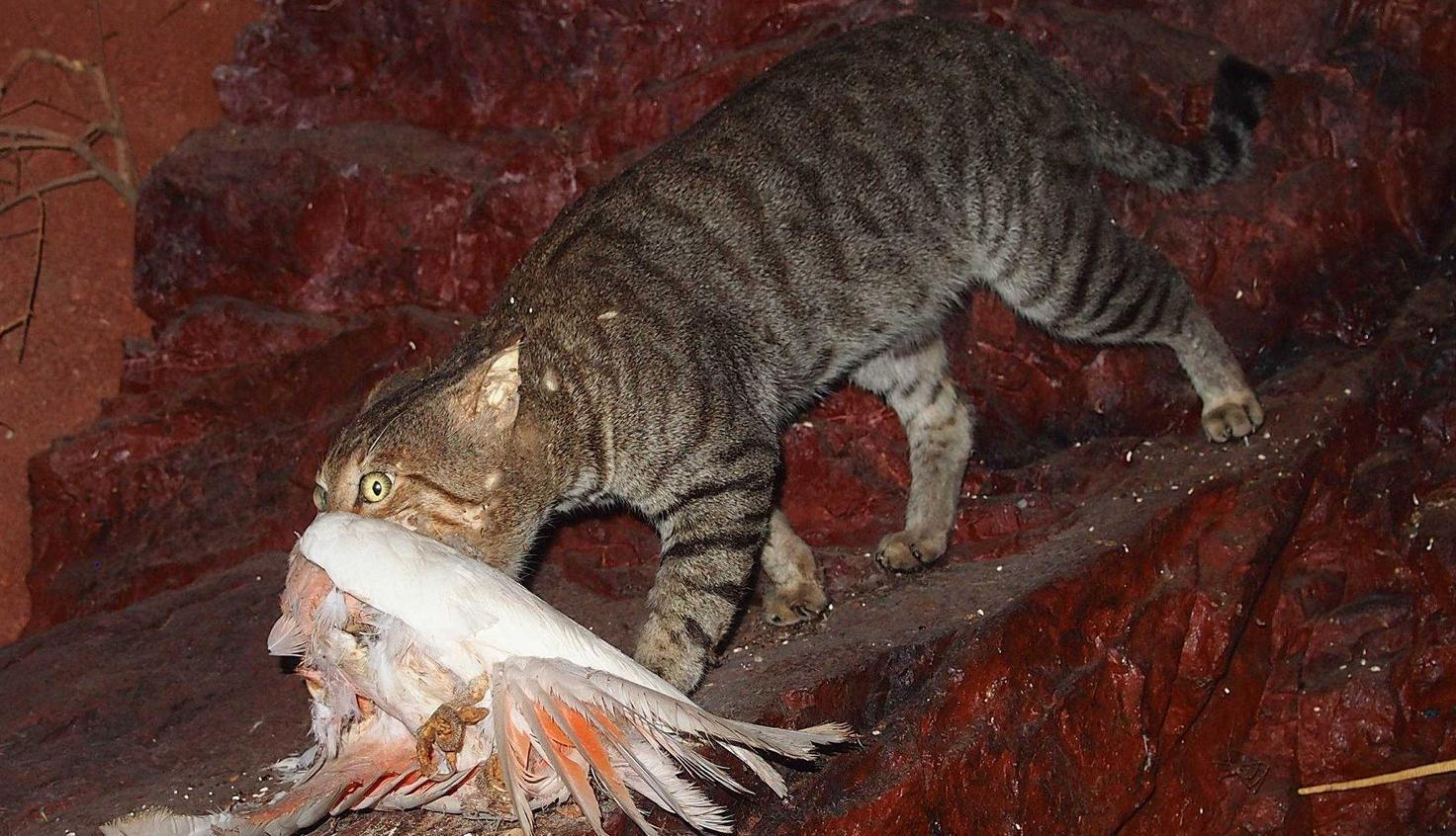 Cats killing millions of birds