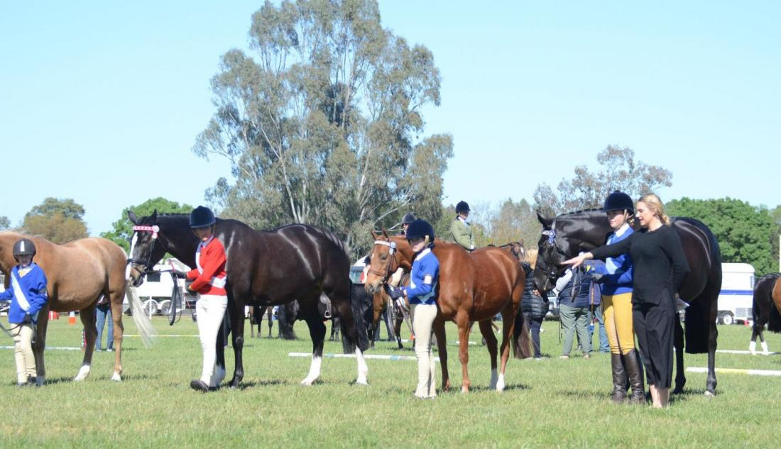 Horses and riders in the ring