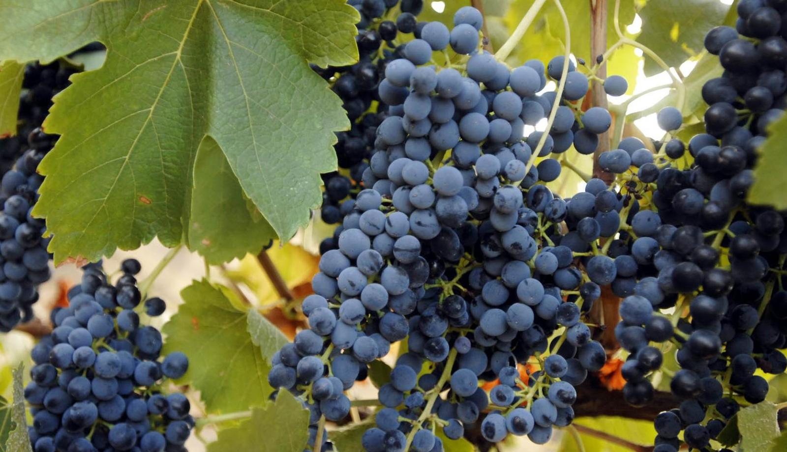 Boost for wine exports