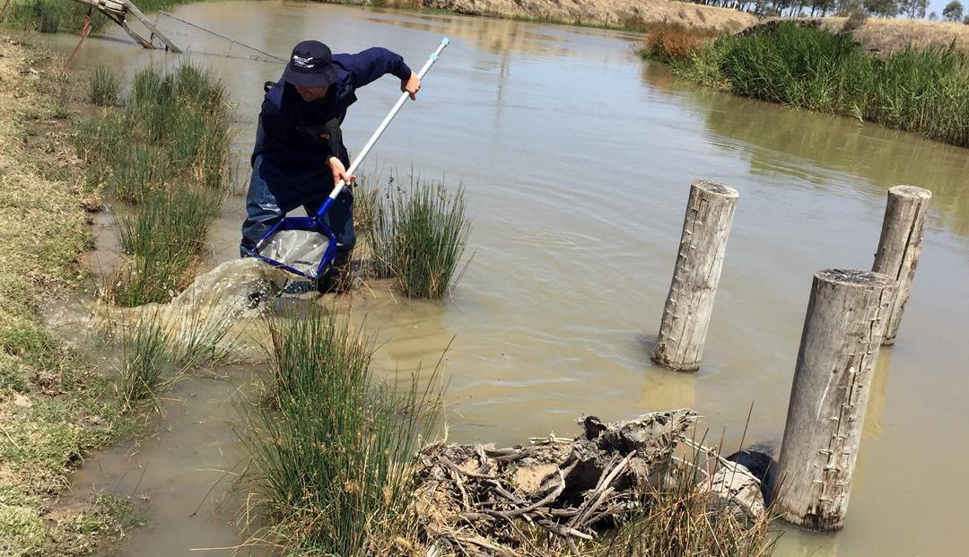 Bugs reveal poor river health
