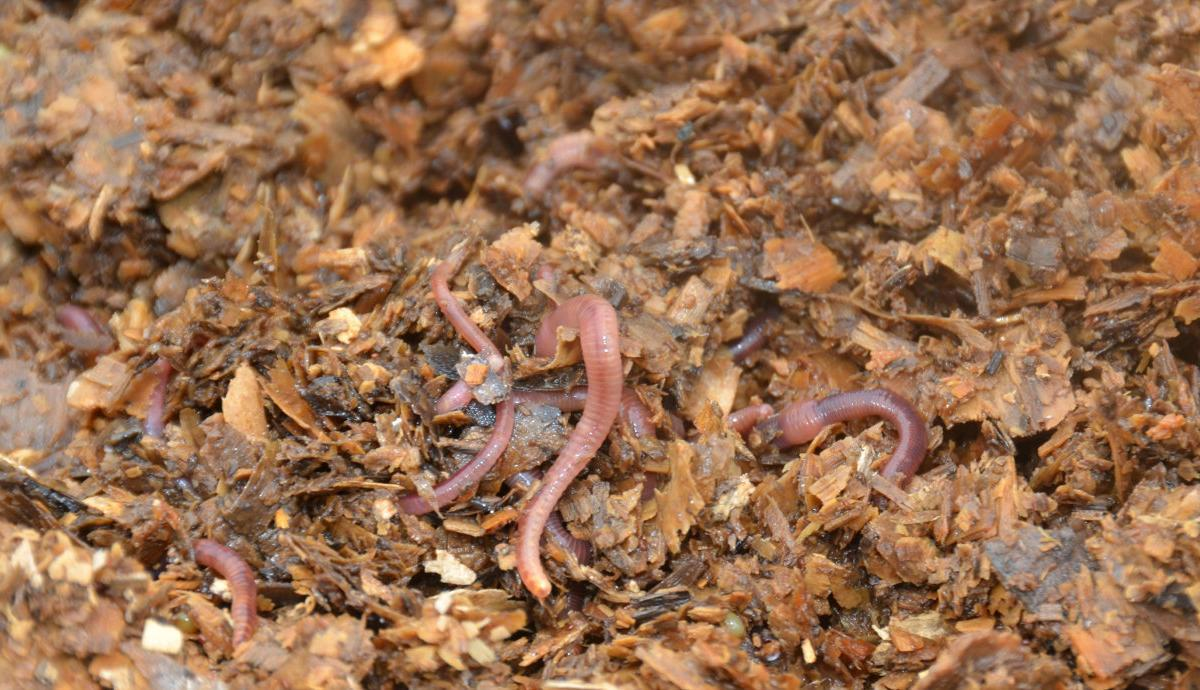 Worm turns for waste