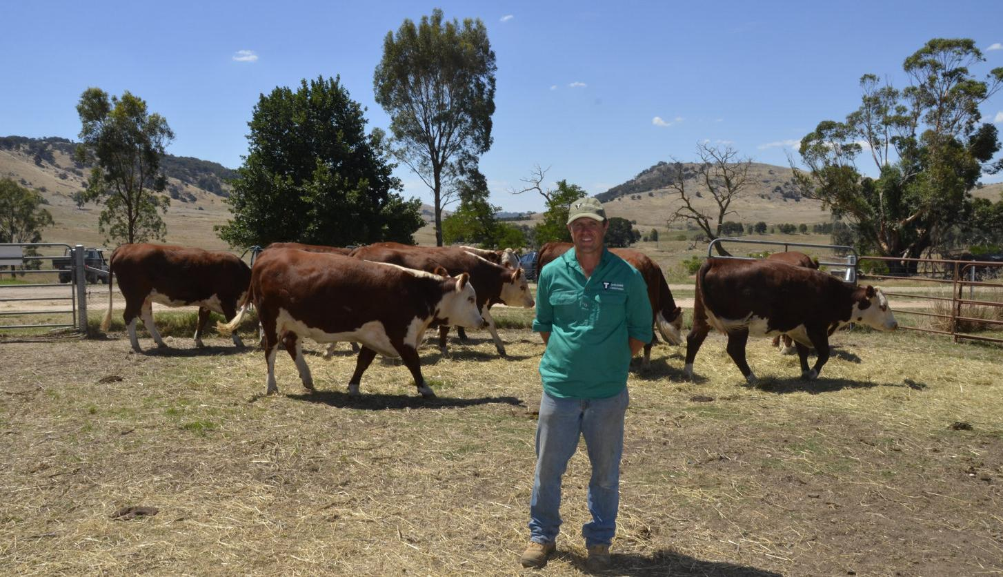 Studs open gates to public for Beef Week