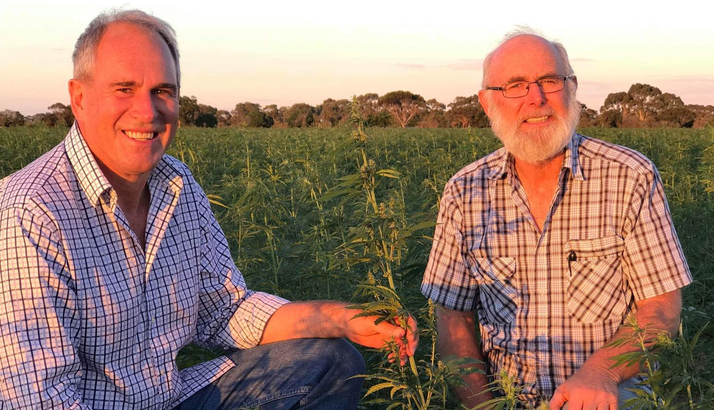 Group seeking hemp growers