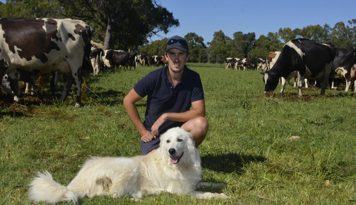 Jet loves his bovine friends